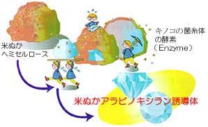 酵素分解イメージ